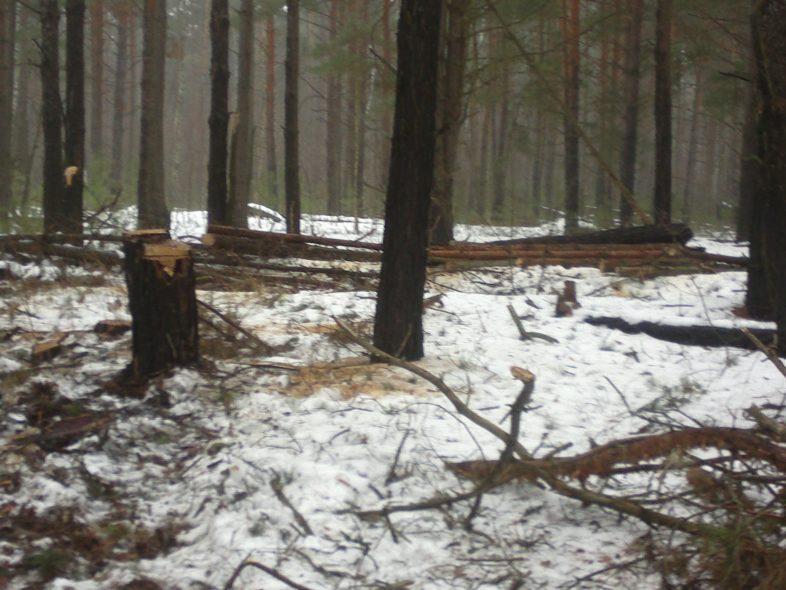 Охорона лісу – справа не лише служби державної охорони,це справа всіх нас