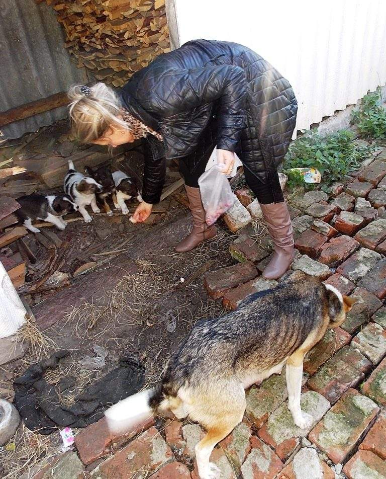 міжнародний День захисту тварин